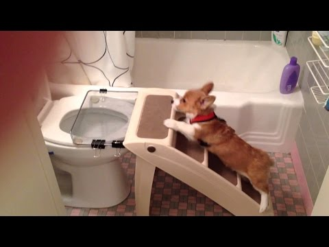 Best Trained & Disciplined Dogs Compilation 2016