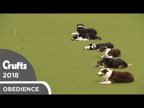 Inter-Regional Obedience - Class C Stays | Crufts 2018