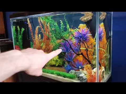 Fish Tank Essentials