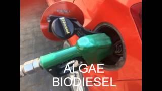 algae biodiesel technology india abca biosolutions pvt ltd and ssp pvt ltd