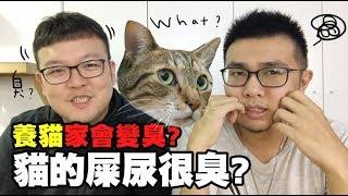 【養貓家會變臭?貓的屎尿很臭?】志銘與狸貓閒聊