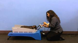 Doggie Treadmill By Dog Tread For Therapy Dogs Review By Trainer.mp4