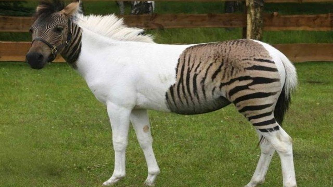 Most Amazing Real Animal Hybrids