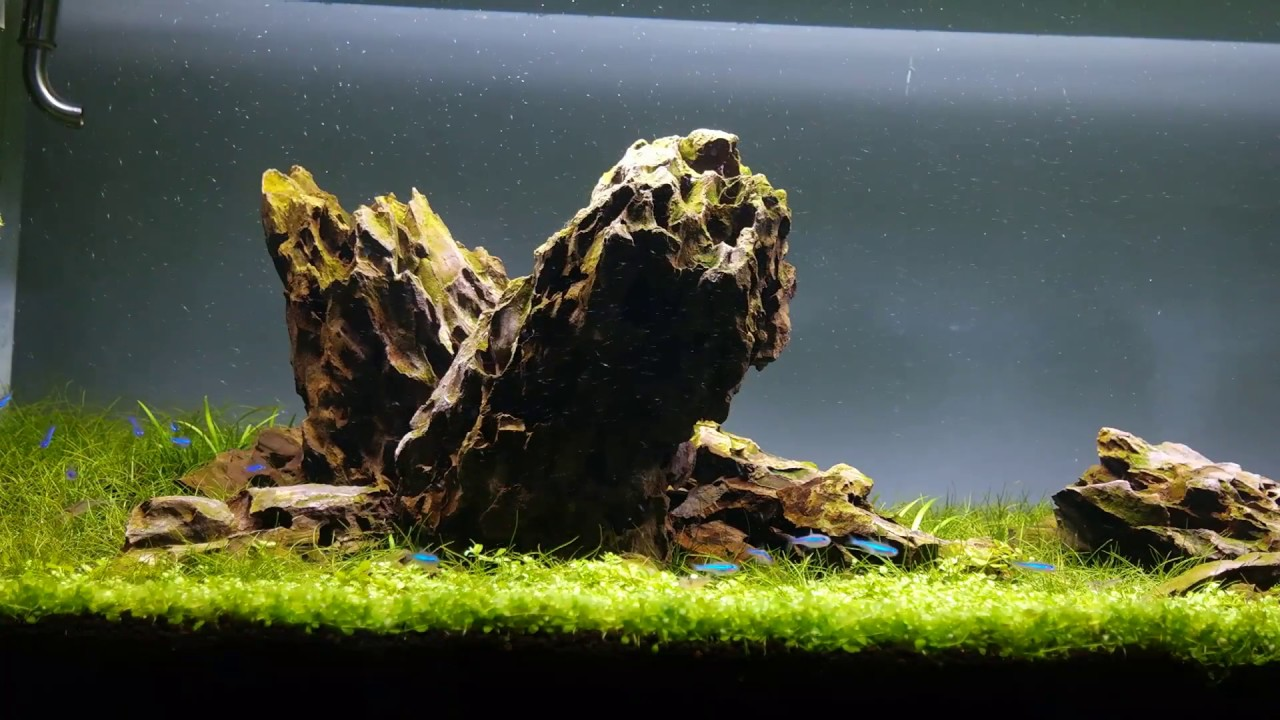 Iwagumi Aquascape - Final video - Day 44 - YouTube