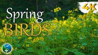 Весенние Голоса Птиц в Лесу |  Красивая Природа для Релаксации, для Сна