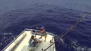 Seawife II - Blue Marlin - Kona Hawaii
