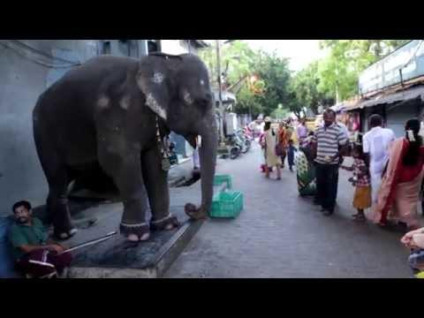 Słoń błogosławi wiernych