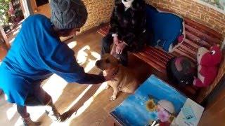 Служба защиты животных города Бердянска