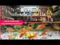 Fish Pets in Cheap Prices   Aquariums   Fish Foods   Shark Pair In Rs.60 🦈   New Delhi  