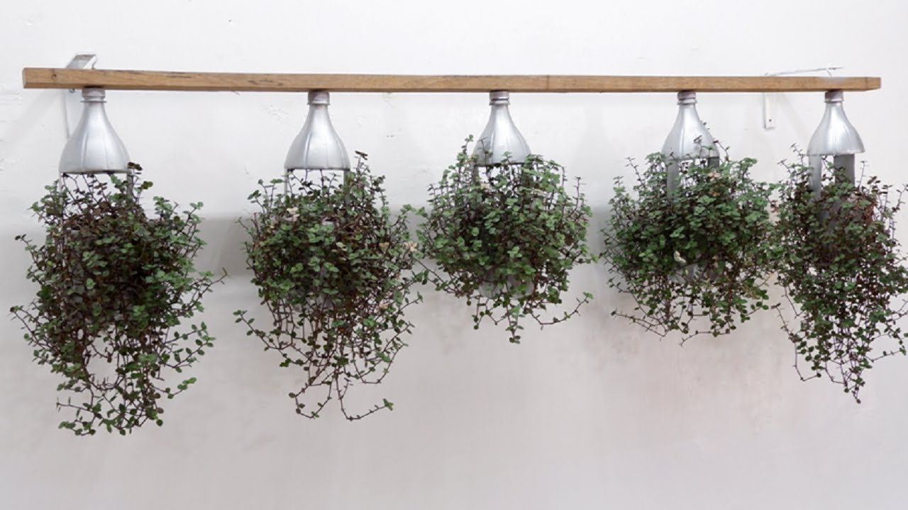 Easy Ways to Hang Turtle Vines with Plastic Bottles and Wood Plank for Outdoor