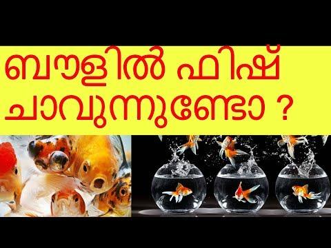 Fish Bowl Basic Details | Vivek Parayil | Parayil Aqua