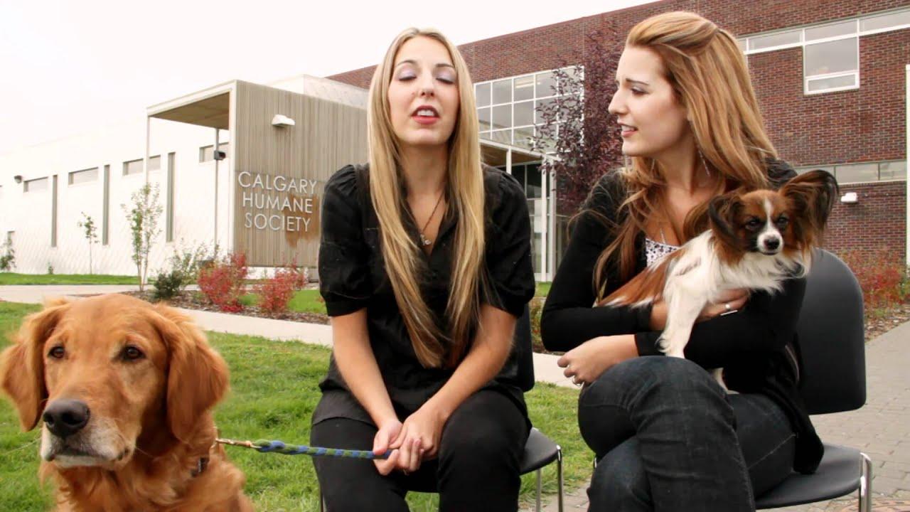 Calgary Humane Society PSA