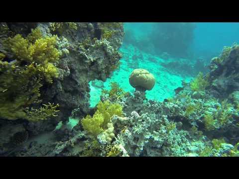 Red Sea Snorkeling Jordan, Aqaba - Japanese Gardens / Morze czerwone, Jordan Aqaba Japońskie Ogrody.