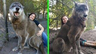 10 Animales Gigantescos Que Son Una Realidad Y No Lo Creerás