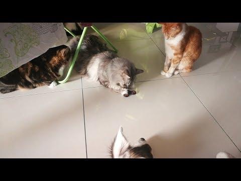 Les Animaux de ReikaJen - Episode Spécial Handspinner (Dog Vs Cat)
