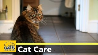 Caring for your cat  keeping indoor cats happy