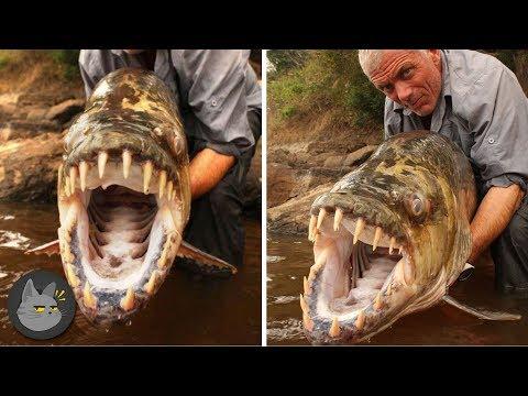 10-animales-aterradores-encontrados-en-ríos
