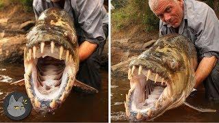 10 Animales Aterradores Encontrados En Ríos