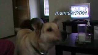 Bizkit the Sleepwalking Dog Talks thumbnail