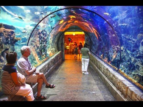 shark reef aquarium at mandalay bay las vegas youtube