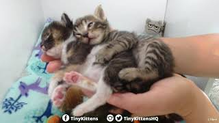Kittens hugging each other in my hands - Starring Aura and B-Rex - TinyKittens.com thumbnail