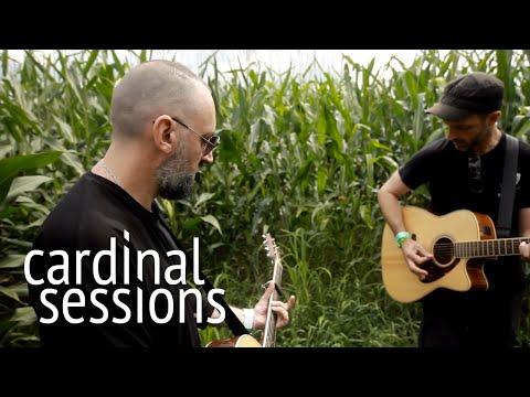 Fink - Pilgrim - CARDINAL SESSIONS (Haldern Pop Special)