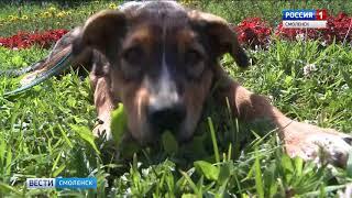 В Смоленске определены территории для выгула собак