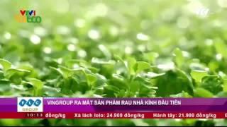 Vingroup ra mắt sản phẩm rau nhà kính đầu tiên | VTV24