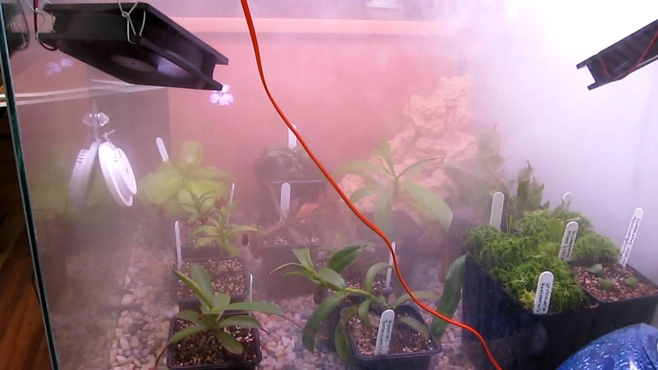 Humidifier In Carnivorous Terrarium Youtube