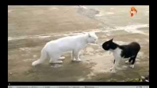 котокарате каратисты коты
