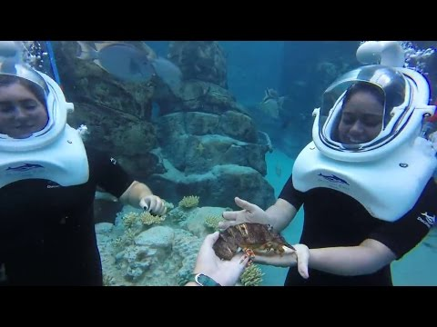 Discovery Cove Orlando - More than Just Dolphins!