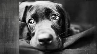 Сергей Есенин - Песнь о собаке