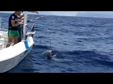 bolentino di profondita spettacolare cattura grongo di 32kg dalla barca nel golfo di Napoli