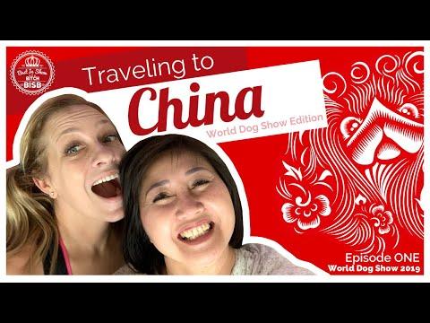Traveling To China: World Dog Show Edition