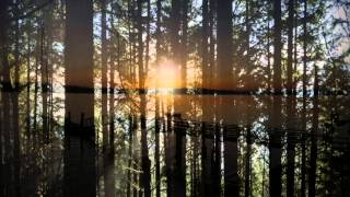 Forty Foot Echo - Rain Inside (Lyric video)