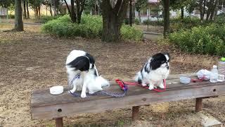 みらいとまろはいつもの公園でのんびり休んでいます。