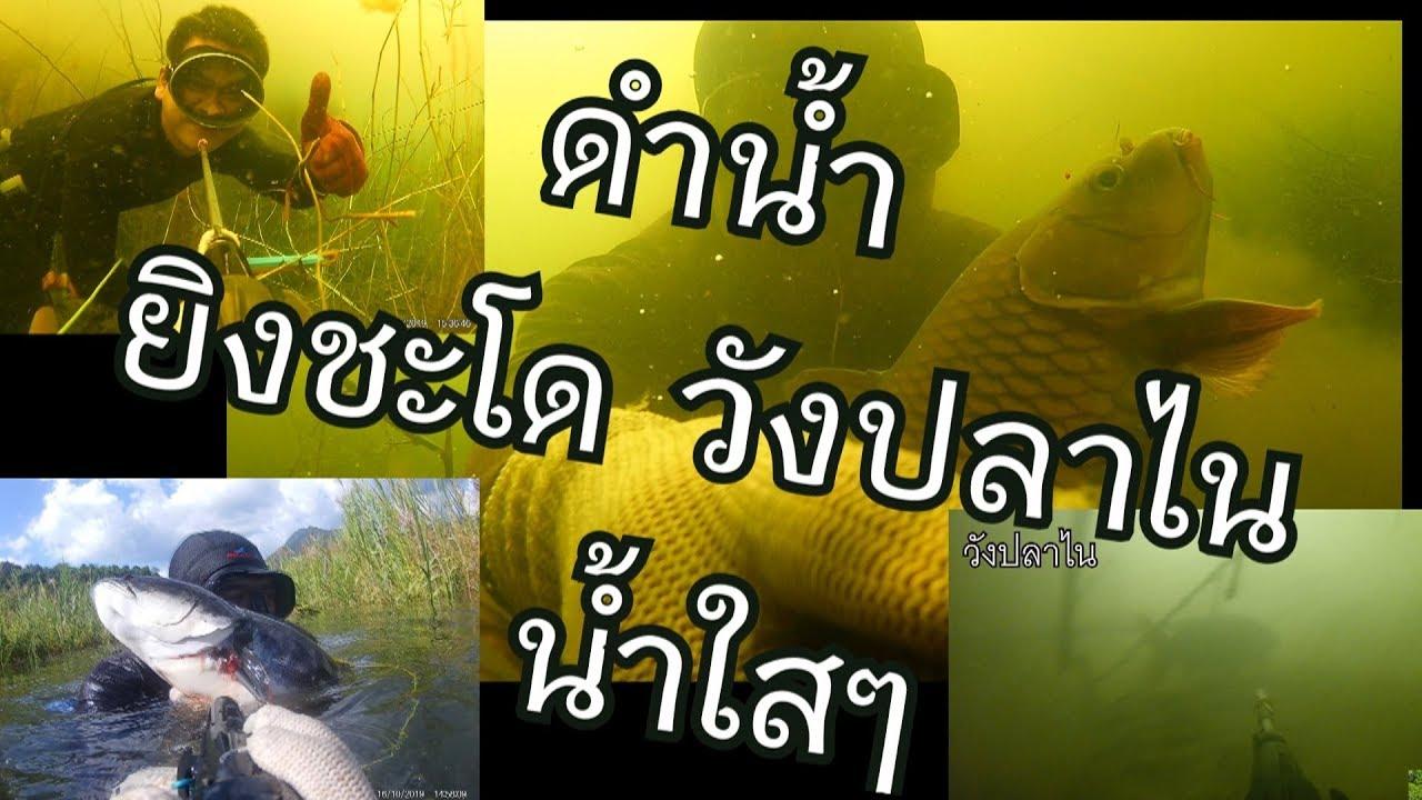 ดำน้ำยิงปลา เขื่อนบ้านลาน น้ำใสเจอวังปลาไน
