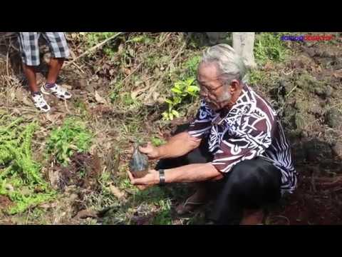 Healing Samoa's forests