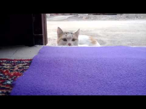 Cat suddenly enter the house, and surprise …