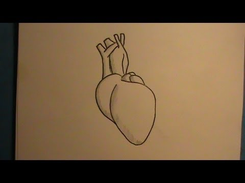 how to draw a real human heart - youtube, Muscles