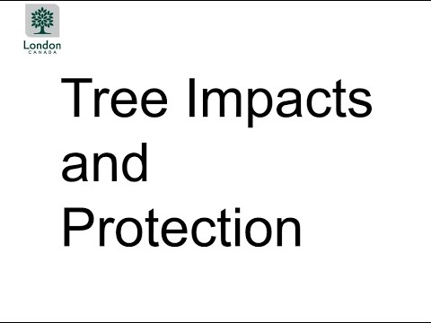 Presentation 3: Tree Impacts and Protection Information for Foster Avenue and Upper Avenue
