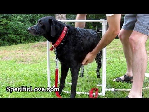 PVC Dog Wash   Pet Life Hacks