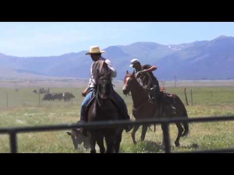 Knight Land & Livestock - Branding the best livestock in the US