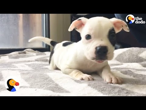 Sweet Puppy With Brain Disorder Living His Very Best Life | The Dodo
