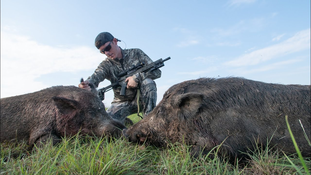 hunting-huge-feral-hogs-on-farm-land