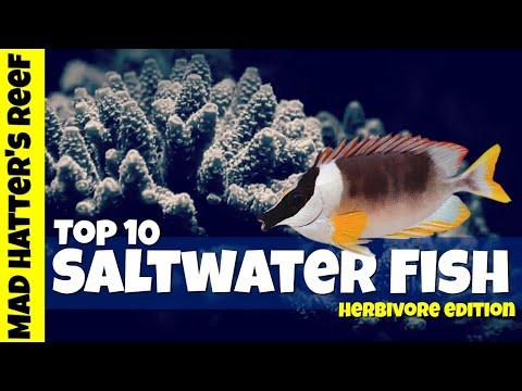 Top 10 Saltwater Fish That Eat Plants
