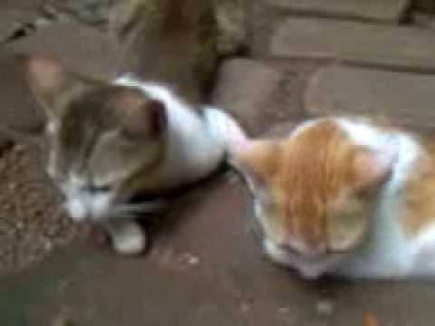manikkutti and kitty kissisng