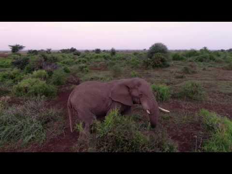 Wild Elephants Encounters Drone