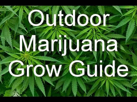 A FAB Guide to Growing Cannabis Outdoors in Australia - Friendly