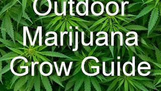 Outdoor Marijuana Grow Guide